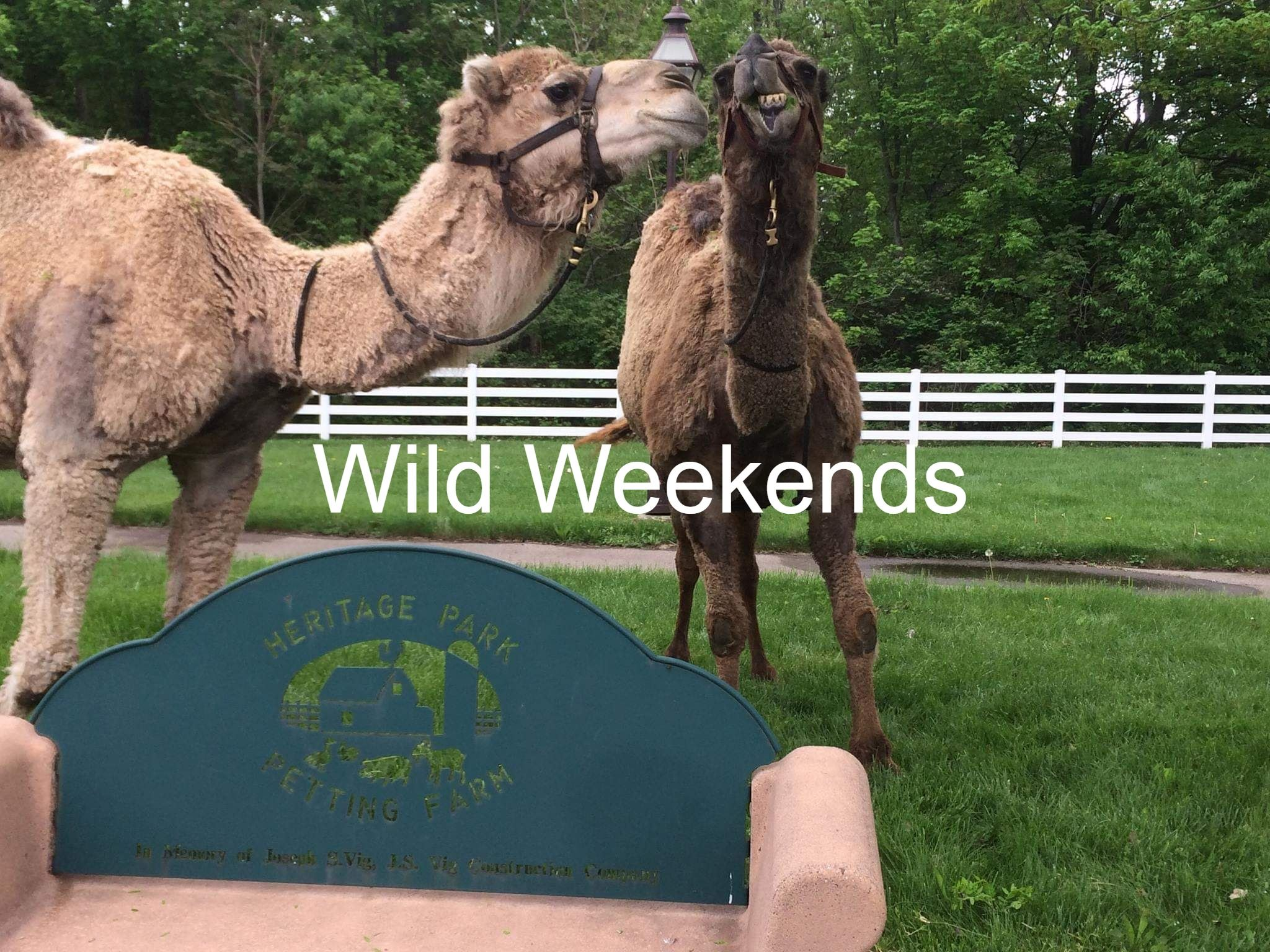 Wild Weekends